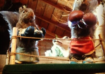 Nick's Pizza and Pub Crystal Lake, Elgin Boxing Squirrel
